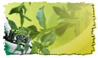 other health benefits of green tea