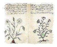 herbal-medicines1